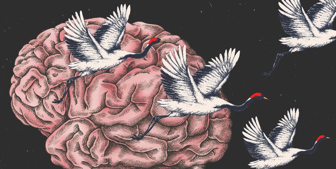 Полет мозга