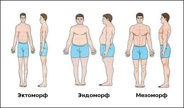 типы тела