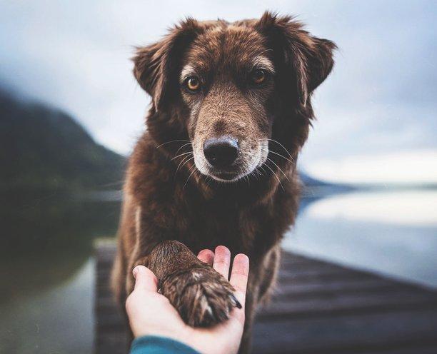 3 вида ветеринарных препаратов, которые необходимы твоему питомцу